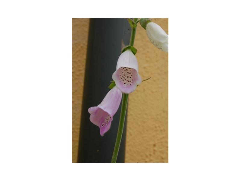 flowers-around-the-house-3