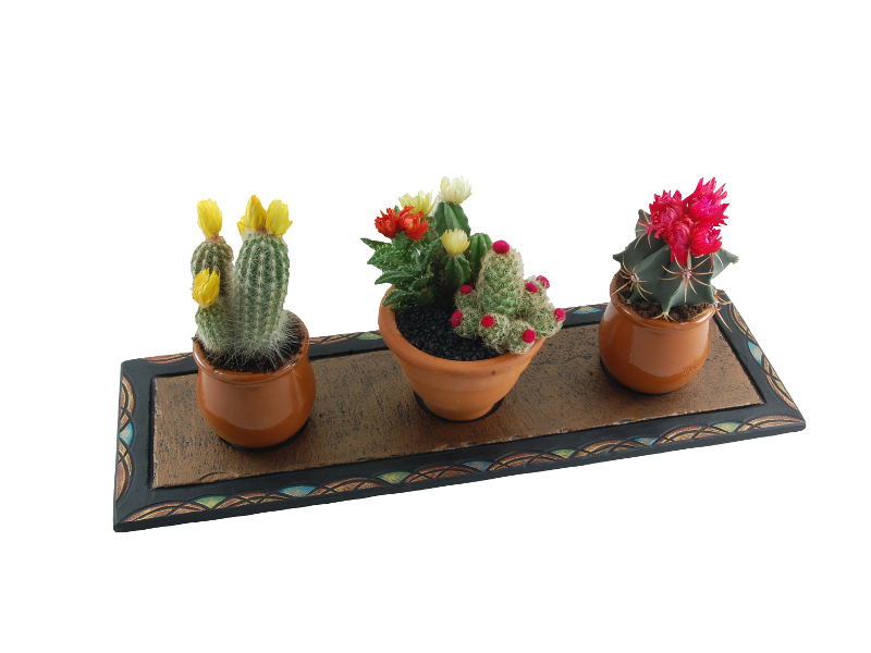 tray-with-cactus